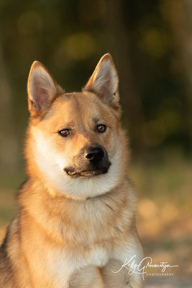 Kelly Groenestijn Hond