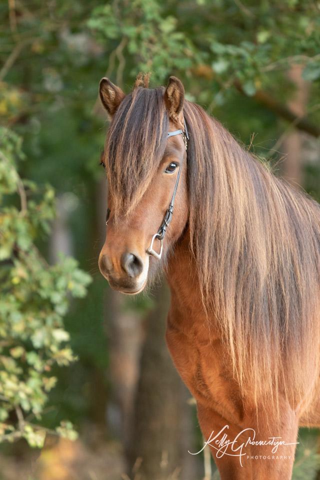 Kelly Groenestijn Paard